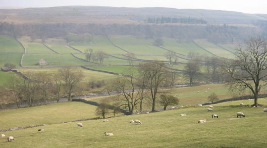 Wharfedale. Photo by Jane Ewins.
