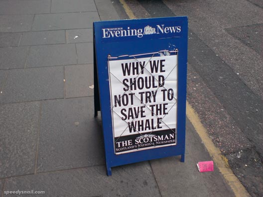 Why we should not try to save the whale - The Scotsman